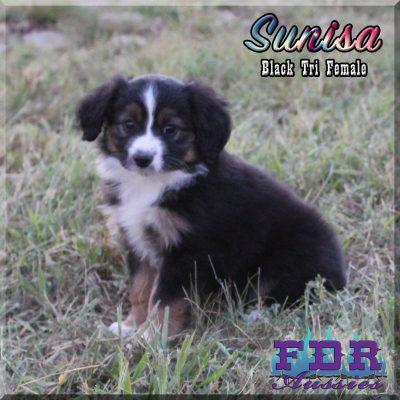 Sunisa 13