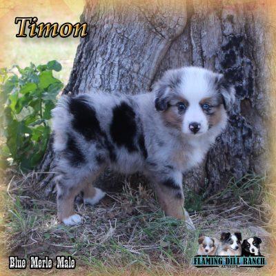 Timon