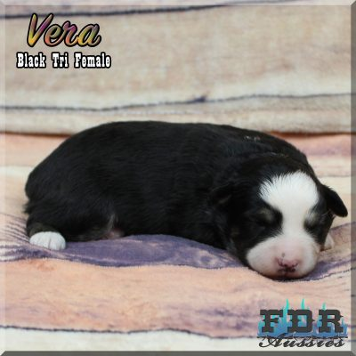 Vera 1
