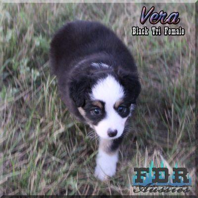 Vera 11