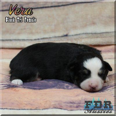 Vera 3