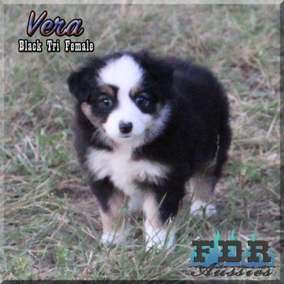 Vera 9